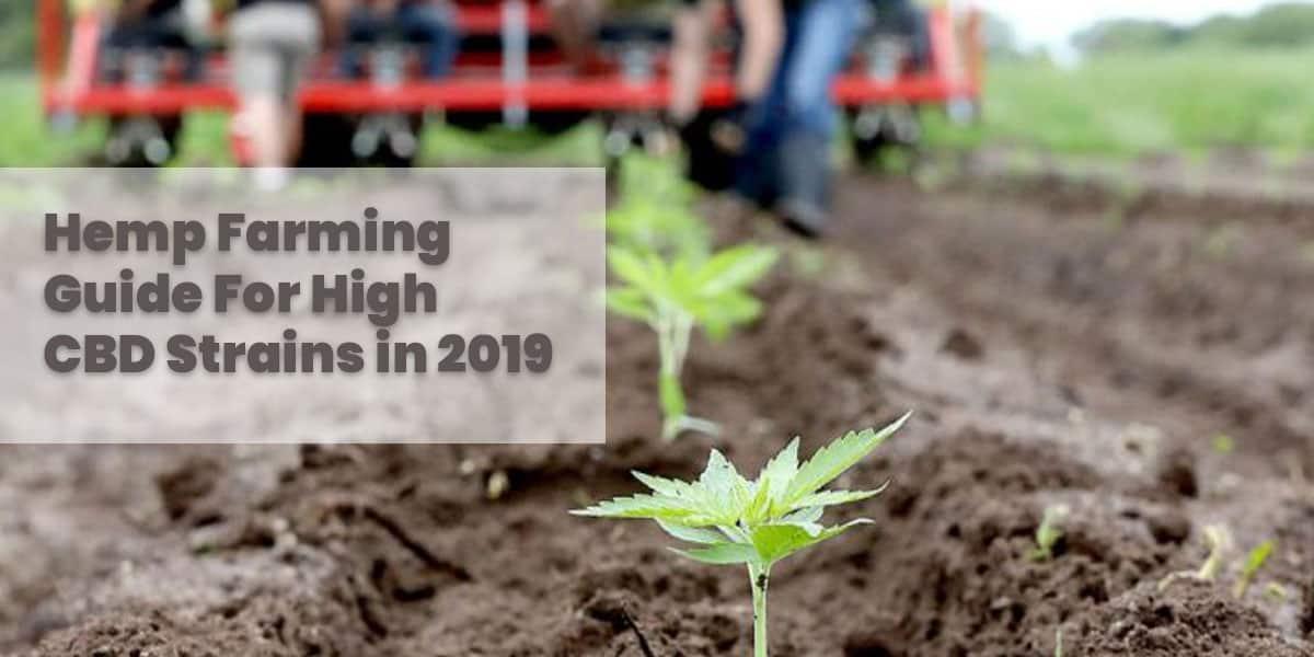 Hemp Farming Guide For High CBD Strains in 2019