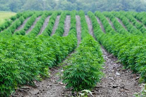 hemp water requirements